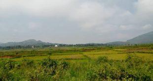 Champs de riz de Buhinyuza